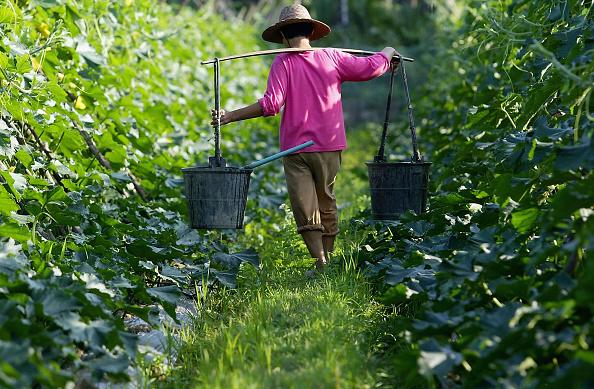 Farm「Chinese Farmers Works In Fields」:写真・画像(3)[壁紙.com]