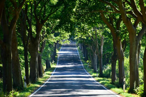 Germany, Ruegen, empty tree-lined road:スマホ壁紙(壁紙.com)