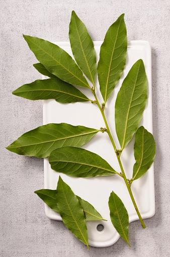 Bay Leaf「laurel-leaf」:スマホ壁紙(6)