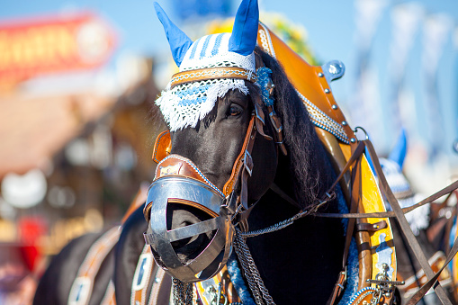お祭り「Germany, Munich, portrait of decorated horse at Oktoberfest」:スマホ壁紙(18)