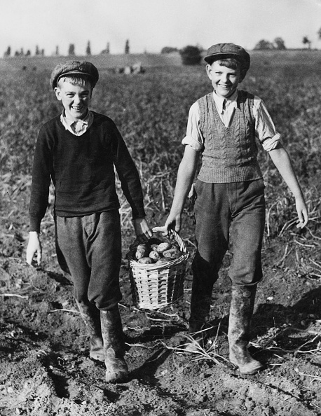 Farm「Schoolboy Potato Pickers」:写真・画像(19)[壁紙.com]
