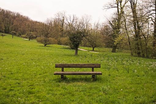 公園「Empty bench in rural park」:スマホ壁紙(9)