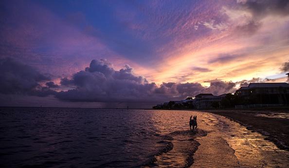 Shallow「Florida Gulf Coast Prepares For Tropical Storm Hermine」:写真・画像(5)[壁紙.com]