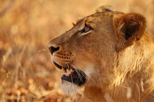 Wilderness Area「An African Safari」:写真・画像(9)[壁紙.com]