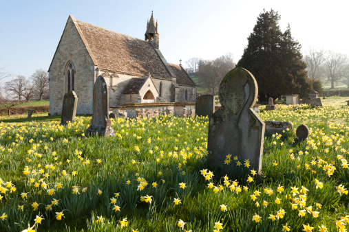 水仙「Springtime at Harescombe, Gloucestershire」:スマホ壁紙(18)