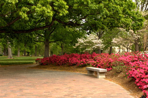 Azalea「Springtime on Campus」:スマホ壁紙(15)