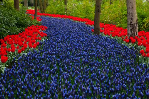 Keukenhof Gardens「Springtime Garden Design in bulbs Kuekenhof Garden」:スマホ壁紙(4)
