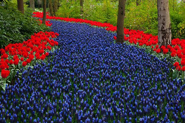 Springtime Garden Design in bulbs Kuekenhof Garden:スマホ壁紙(壁紙.com)