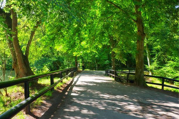 Springtime bridge:スマホ壁紙(壁紙.com)