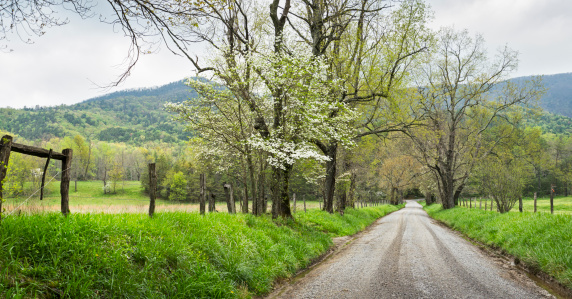 Country Road「Springtime dogwood trees panoramic in the Smoky Mountains」:スマホ壁紙(17)