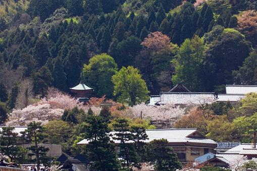 Arashiyama「Springtime, Arashiyama, Kyoto Prefecture, Japan.」:スマホ壁紙(13)