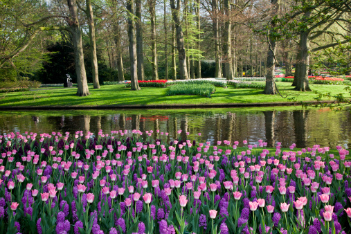 Keukenhof Gardens「Springtime Tulips and Hyacinths Keukenhof Gardens」:スマホ壁紙(6)