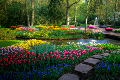Botanical Garden「Springtime Keukenhof Gardens with pathway」:スマホ壁紙(13)
