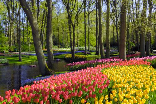 Keukenhof Gardens「Springtime Garden Design 」:スマホ壁紙(15)
