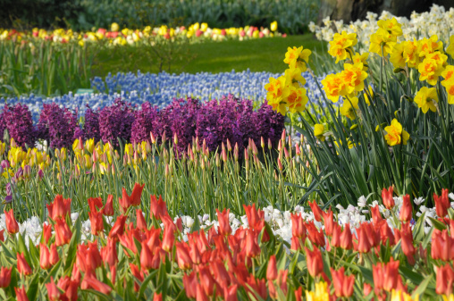 Keukenhof Gardens「Springtime Garden Design」:スマホ壁紙(17)