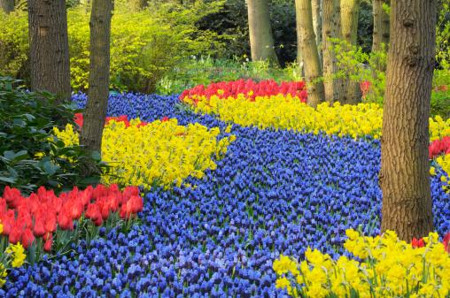 Keukenhof Gardens「Springtime Garden Design」:スマホ壁紙(3)