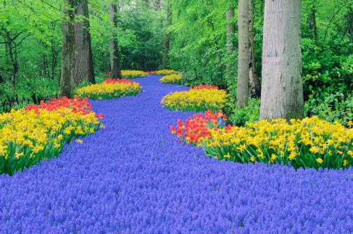 Keukenhof Gardens「Springtime Garden Design.」:スマホ壁紙(8)