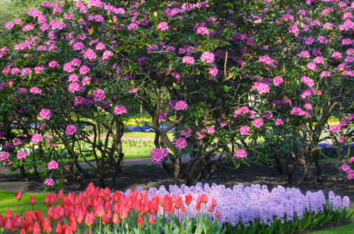 Keukenhof Gardens「Springtime Garden Design」:スマホ壁紙(4)