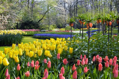 Keukenhof Gardens「Springtime Garden Design」:スマホ壁紙(9)