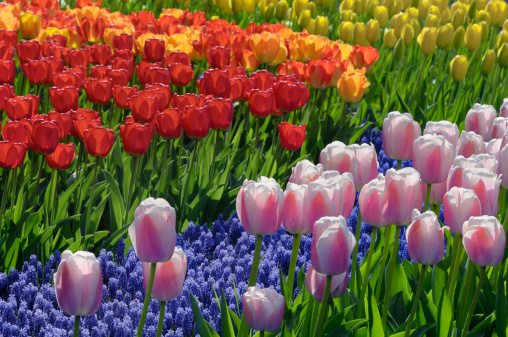Keukenhof Gardens「Springtime Garden Design」:スマホ壁紙(12)