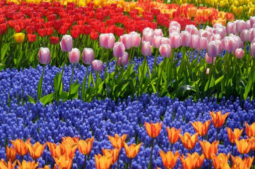 Keukenhof Gardens「Springtime Garden Design」:スマホ壁紙(11)