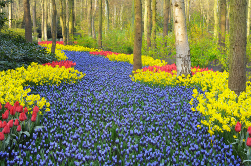 Keukenhof Gardens「Springtime Garden Design」:スマホ壁紙(16)