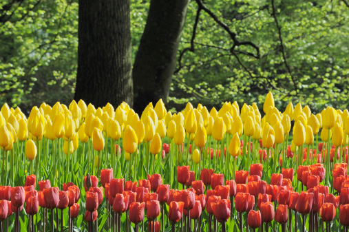Keukenhof Gardens「Springtime Garden Design.」:スマホ壁紙(14)