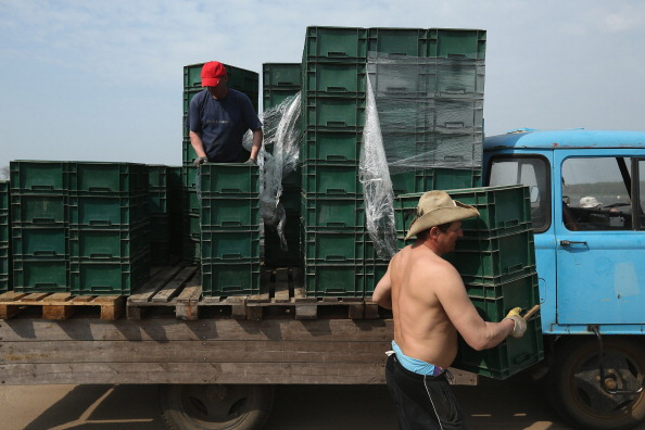 Asparagus「Workers Harvest Asparagus In Beelitz Region」:写真・画像(14)[壁紙.com]