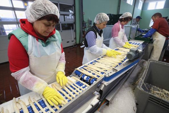 White Asparagus「Workers Harvest Asparagus In Beelitz Region」:写真・画像(9)[壁紙.com]
