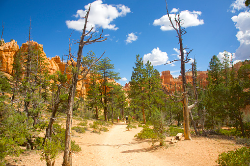 Pretty「Trees blackened by fire in Bryce Canyon National Park, Utah」:スマホ壁紙(7)