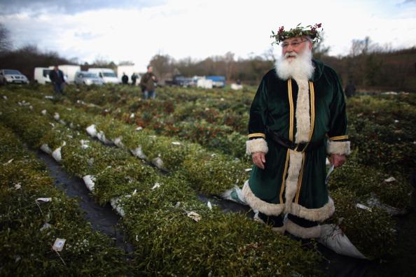 宿り木「Tenbury Mistletoe Festive Auction」:写真・画像(7)[壁紙.com]