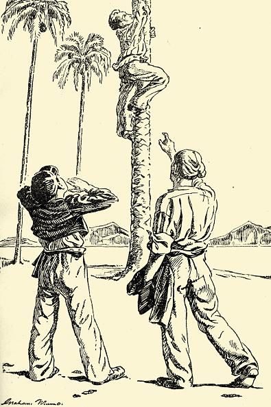 Tree Squirrel「The Coral Island」:写真・画像(3)[壁紙.com]