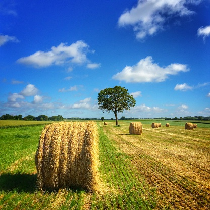 Harvesting「Hay bales in a field, Poitou-Charentes, France」:スマホ壁紙(11)