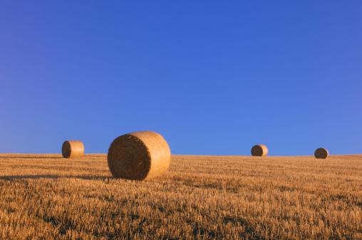 Hair Stubble「Hay bales in field」:スマホ壁紙(1)