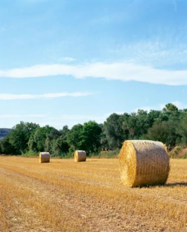 放牧地「Hay bales in field」:スマホ壁紙(7)