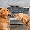 犬壁紙の画像(壁紙.com)