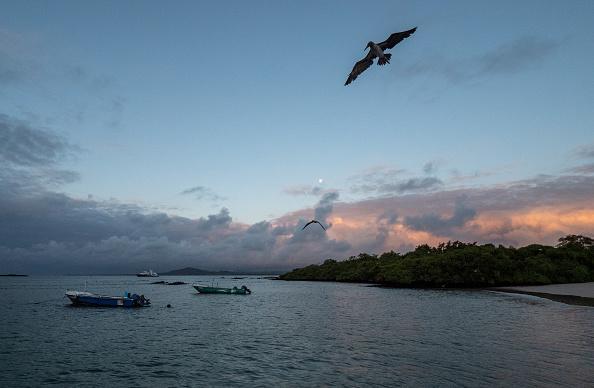 世界遺産「Nature and Human Lives Seek Equilibrium In Galapagos」:写真・画像(18)[壁紙.com]