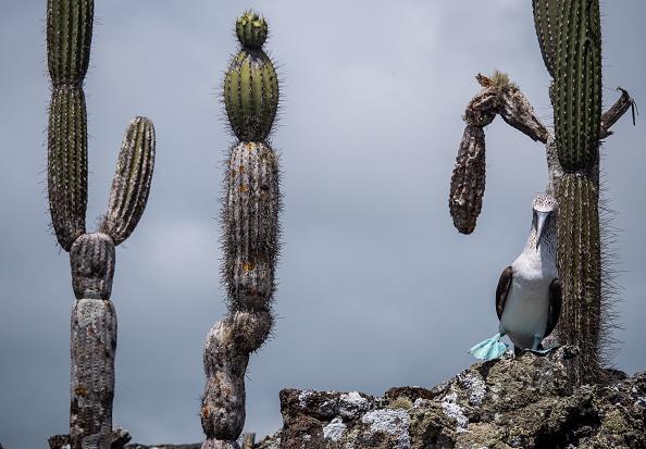 世界遺産「Nature and Human Lives Seek Equilibrium In Galapagos」:写真・画像(8)[壁紙.com]