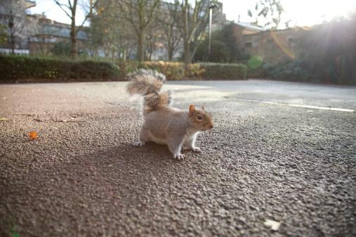 リス「squirrel with flare」:スマホ壁紙(12)