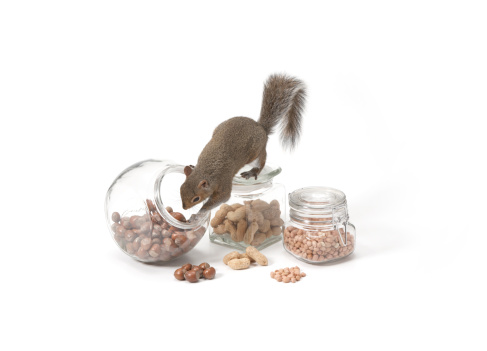 リス「Squirrel with jars of nuts」:スマホ壁紙(15)