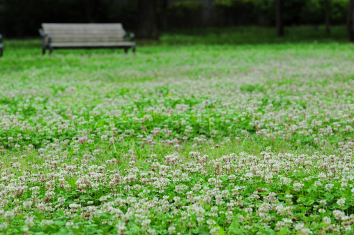 Bench「Bench in park and clovers」:スマホ壁紙(9)