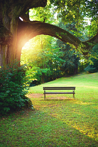Lawn「Bench in park at sunset」:スマホ壁紙(10)