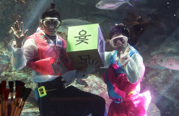 Celebration Event「South Koreans In HanBok Dive In Aquarium Celebrating Upcoming Lunar New Year In Seoul」:写真・画像(14)[壁紙.com]