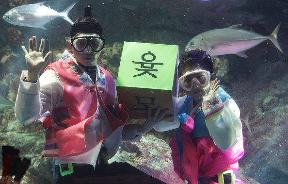 Tradition「South Koreans In HanBok Dive In Aquarium Celebrating Upcoming Lunar New Year In Seoul」:写真・画像(13)[壁紙.com]