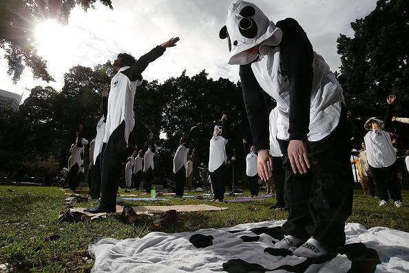 Bestpix「Sydneysiders Practice Yoga In Animal Onesies」:写真・画像(6)[壁紙.com]