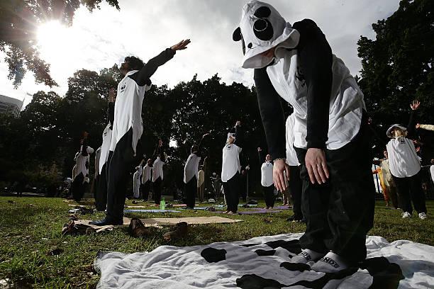Sydneysiders Practice Yoga In Animal Onesies:ニュース(壁紙.com)
