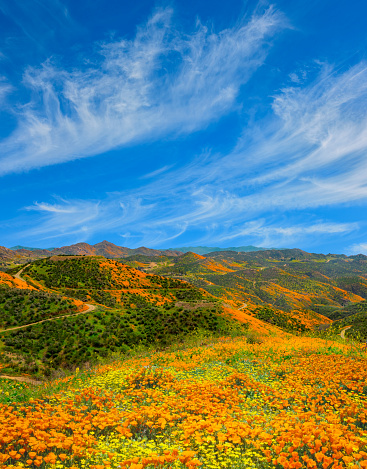Valley「Poppy super bloom at Walker Canyon Lake Elsinore, CA (P)」:スマホ壁紙(15)