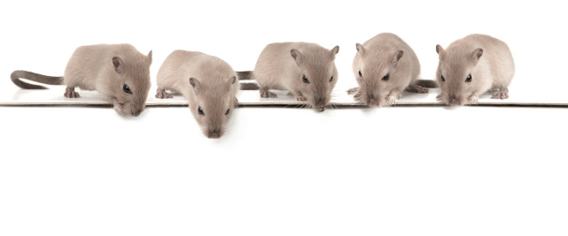 Watching「Five mice looking down」:スマホ壁紙(15)