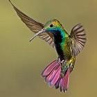 鳥壁紙の画像(壁紙.com)