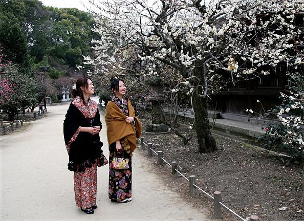 梅の花「Plum Blossom At Kitano Tenmangu Shrine」:写真・画像(0)[壁紙.com]